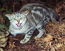 Socializing a feral cat