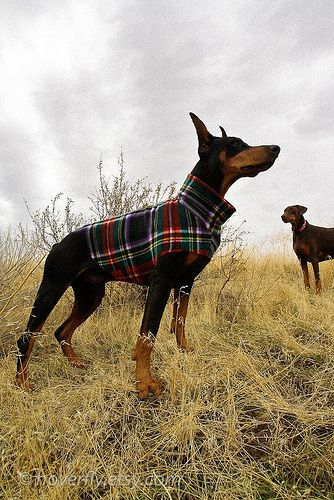 Plaid Dog Sweater Live Pinterest Dogs Dog Sweaters And Doberman