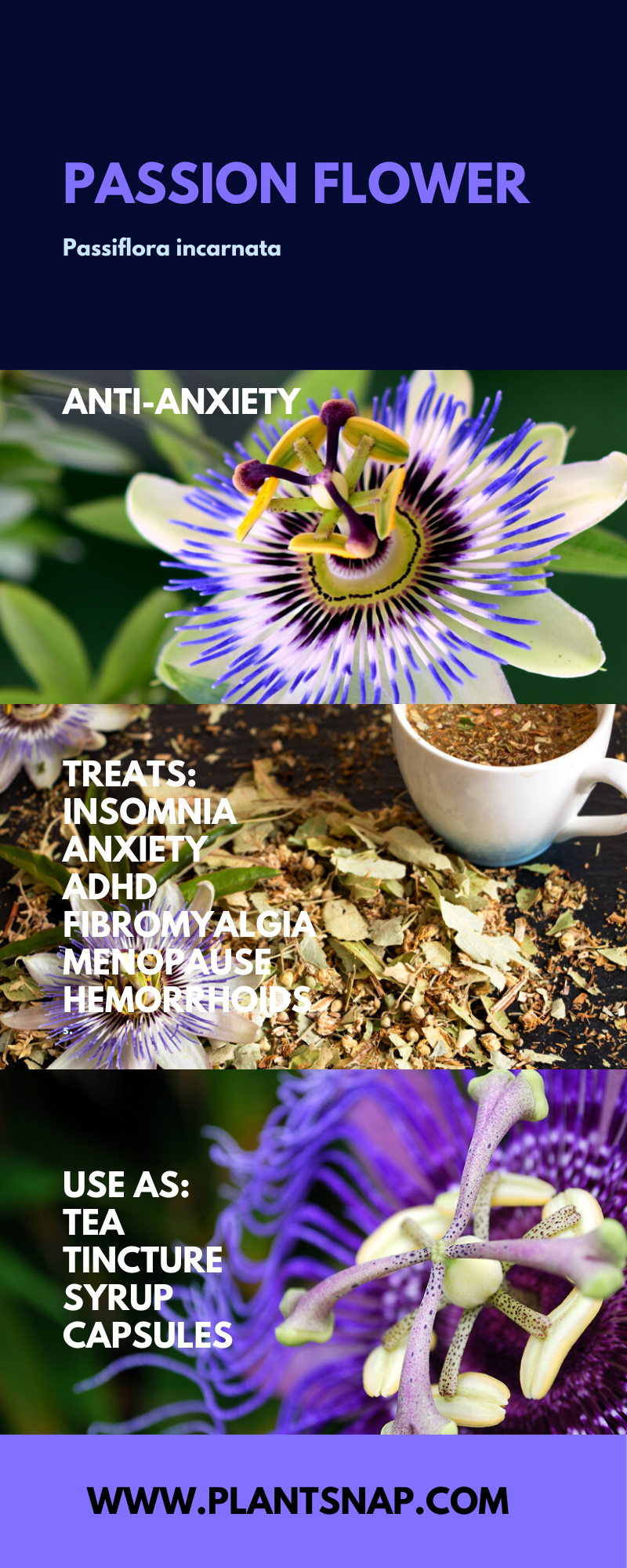 Passion Flower In 2020 Passion Flower Identify Plant Plant Identification