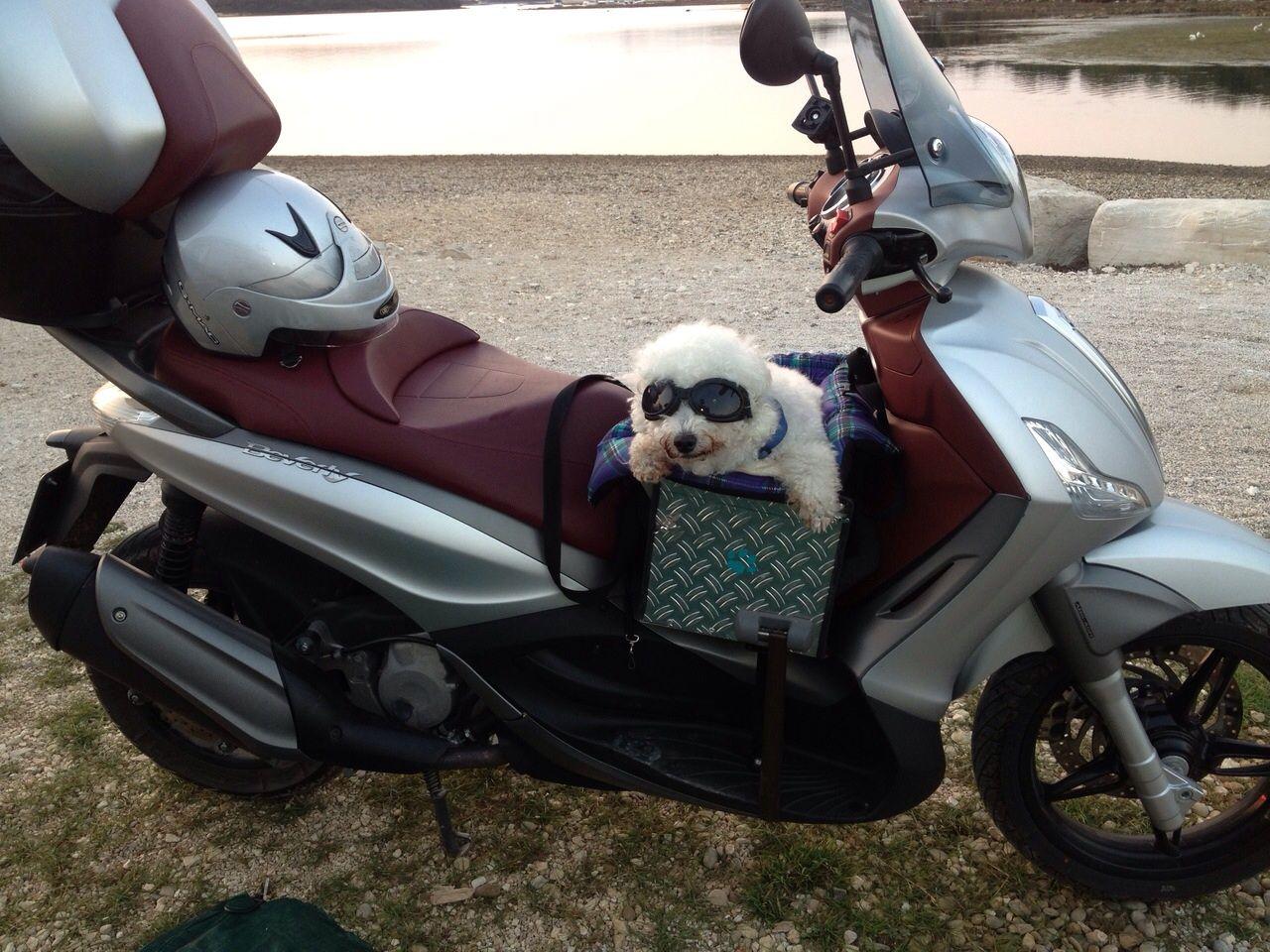 Weihnachtsdeko Bei Roller.Hundetransport Auf Roller Udos Eigene Diy Hundetransport Roller