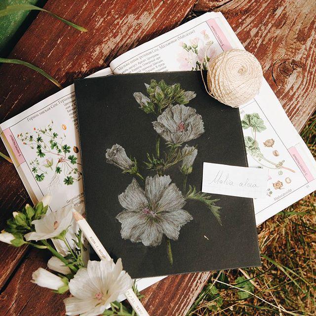 I love black paper .  #vsco #vscocam #illustration #summer #June #nature #drawing #analog #liveautentic #livefolk #botanical #book #flowers #livethelittlethings #livegreen #painting #folk