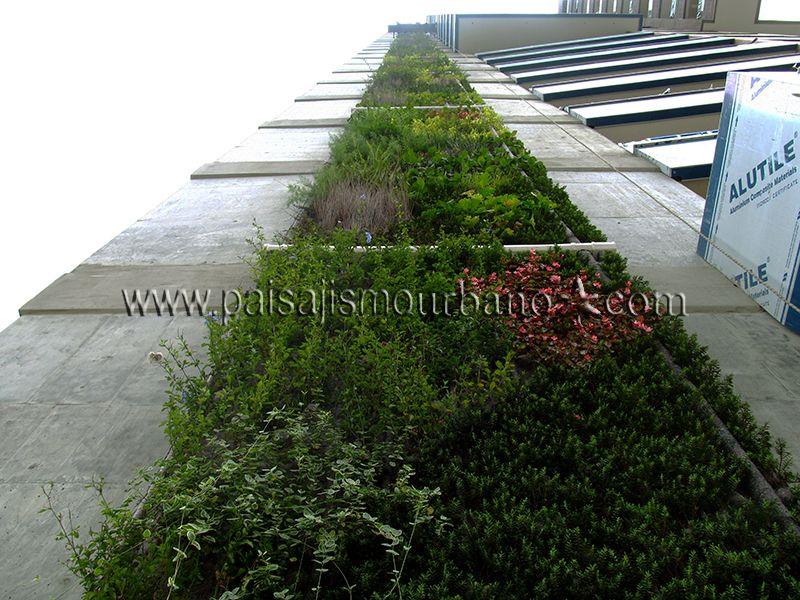 Ecosistema Vertical en Colombia, Medellín. Edificio Green. 2º Jardín Vertical más alto del mundo.