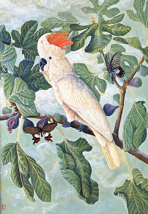 Paintings of Flowers and Birds - Luca Palermo - Picasa Web Albums