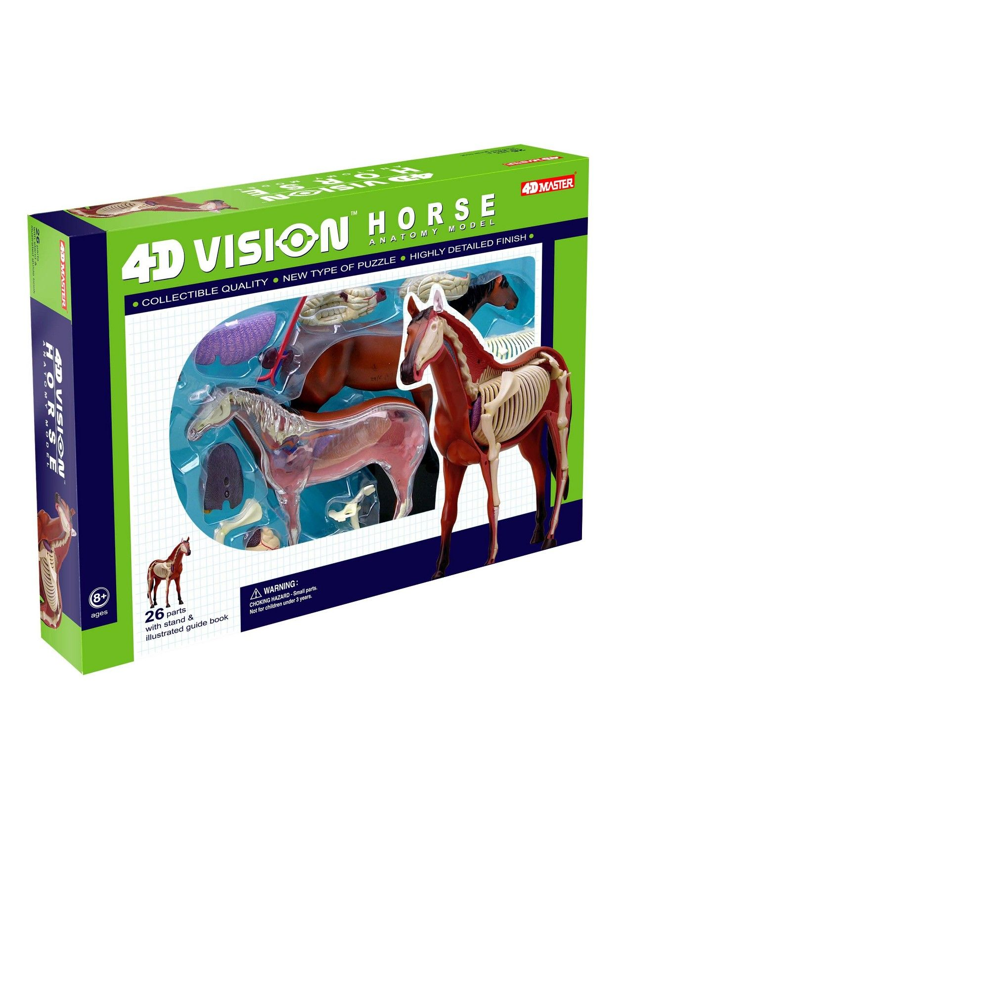 4D Horse Anatomy Model, Anatomy and Biology Kits | Products ...