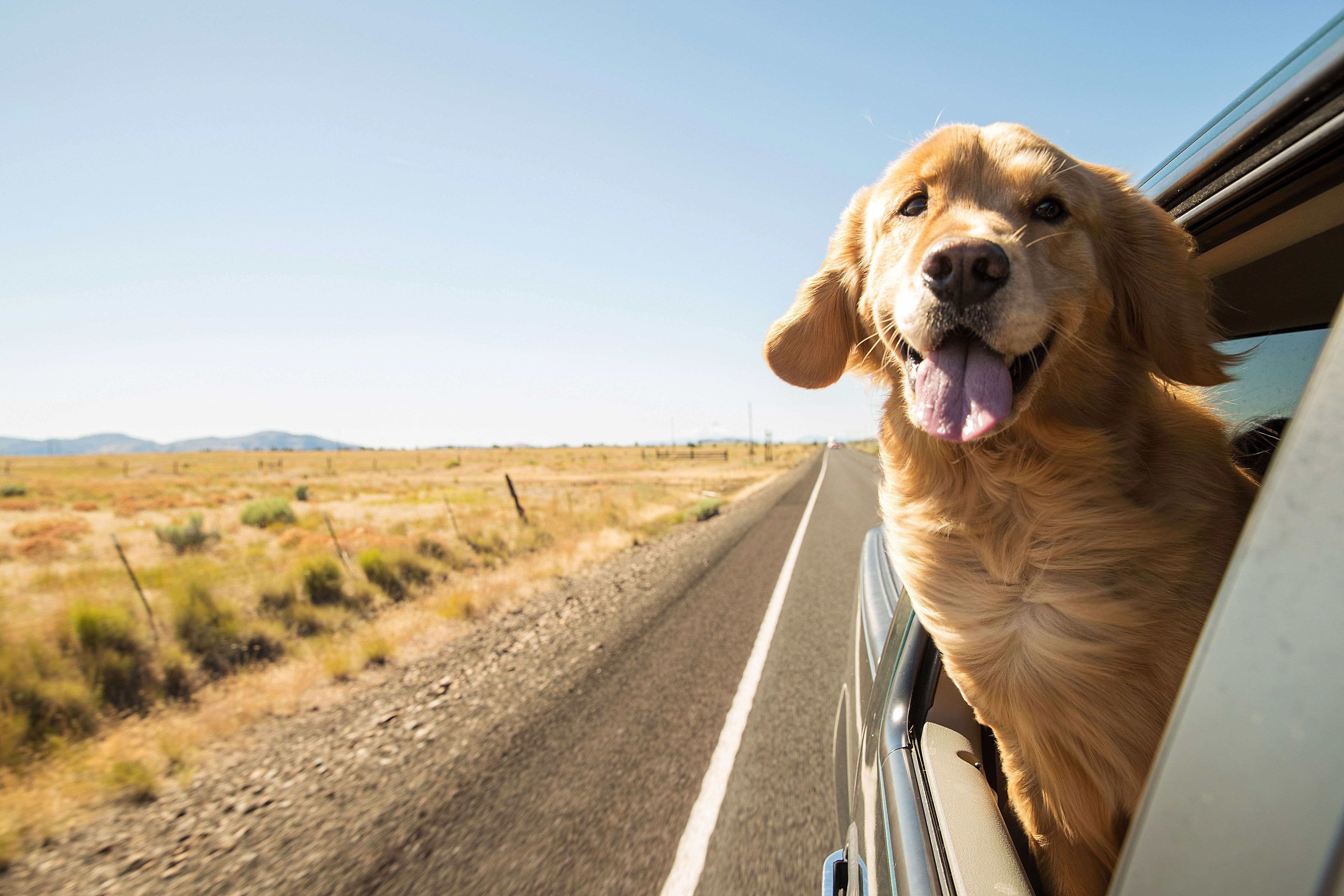 Texas Dog Friendly Travel Guide Dog Travel Dogs Golden