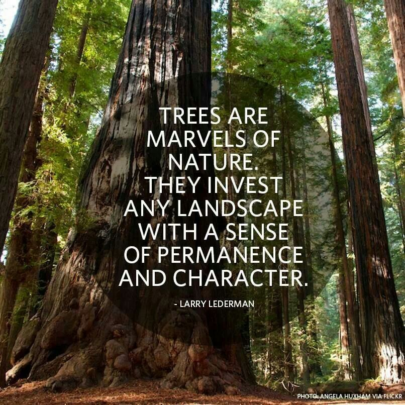 Trees are awesome (With images) Tree, Nature quotes