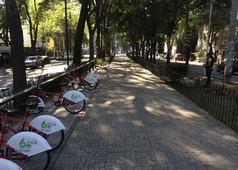 The Magic Of Tree Lined Streets Parque Linear