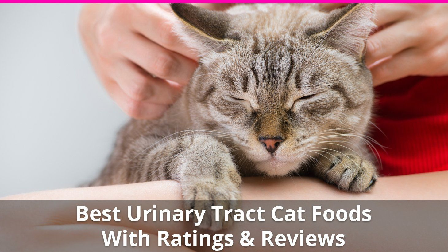 Best Cat Food for Urinary Tract Health 😸 Wet and Dry Brand