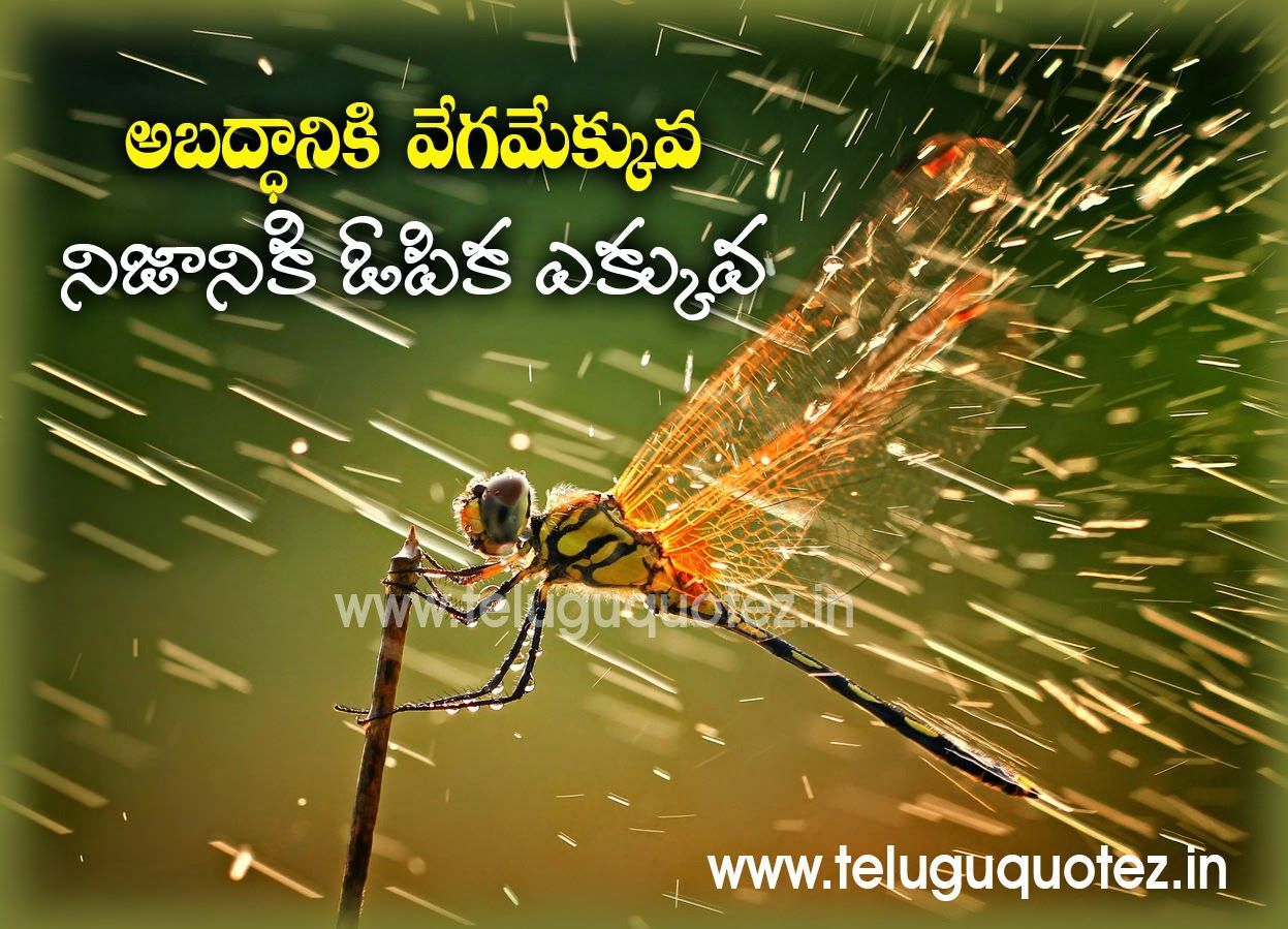 pin on telugu quotes