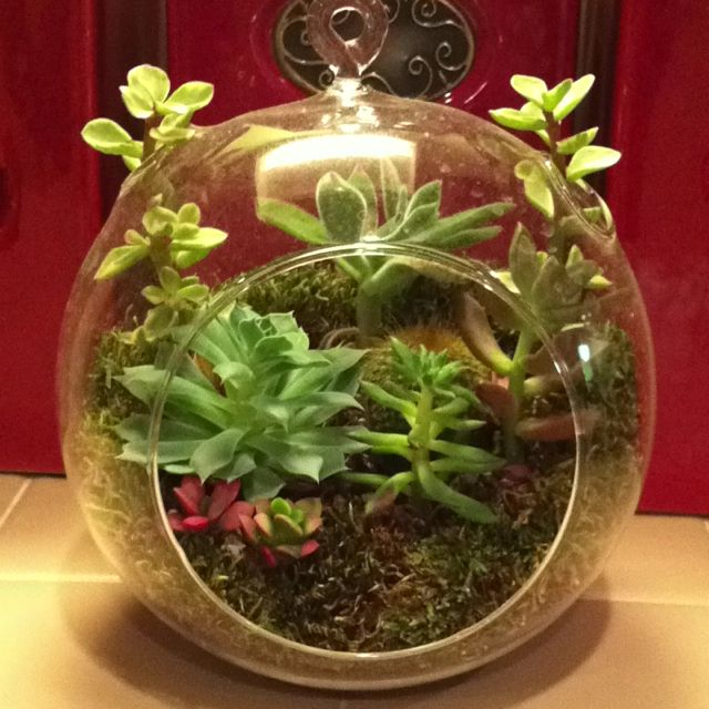 Cactus Plants In A Glass Bowl