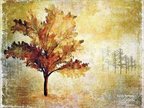 My Robinia Tree Created Using The Photoshop Tree Filter Photo Art