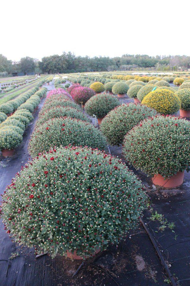 Le piante ornamentali da esterno: • alberi • arbusti • bambù ...