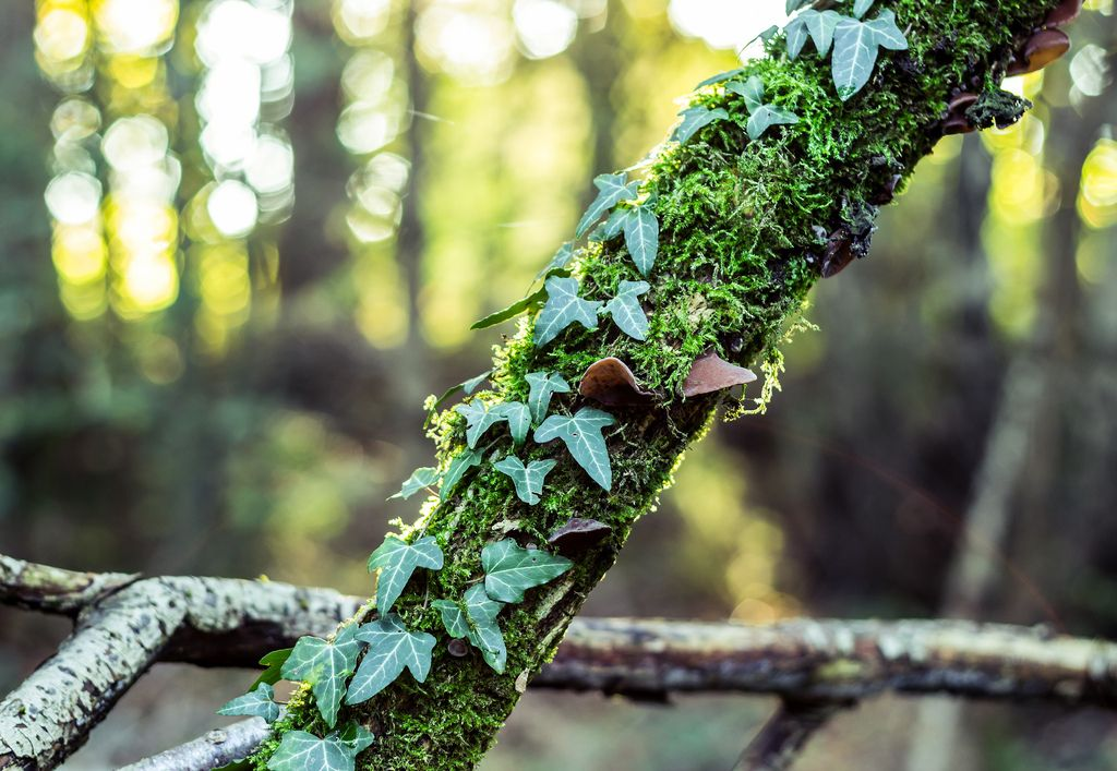 Ivy & Moss | 출처: Forester__