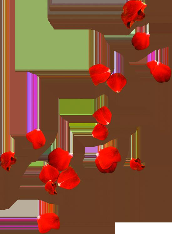 Rose Petals Png Free Image Red Rose Petals Flower Png Images Rose Clipart