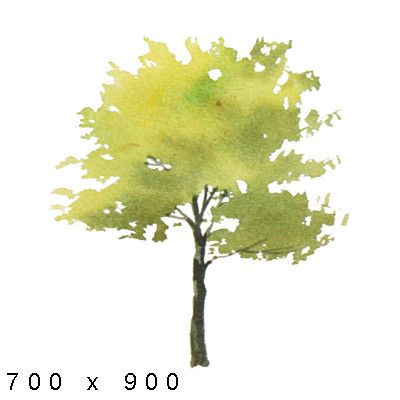 Texture Png Watercolor Elements Plants 나무 그림 수채화 나무 자연