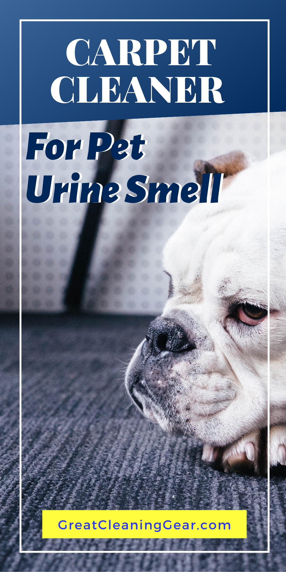 Best Carpet Shampooer For Pet Urine Pet Owner Hacks Pet