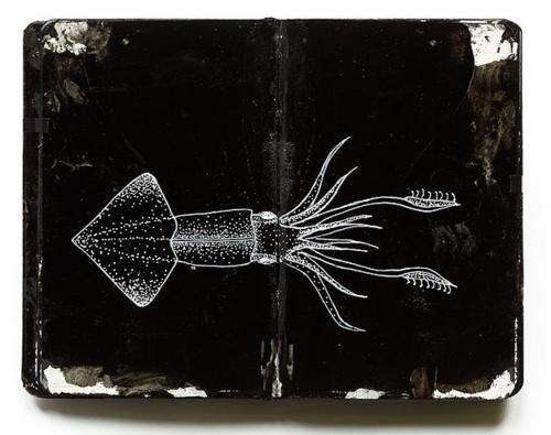 A Squid's Diary
