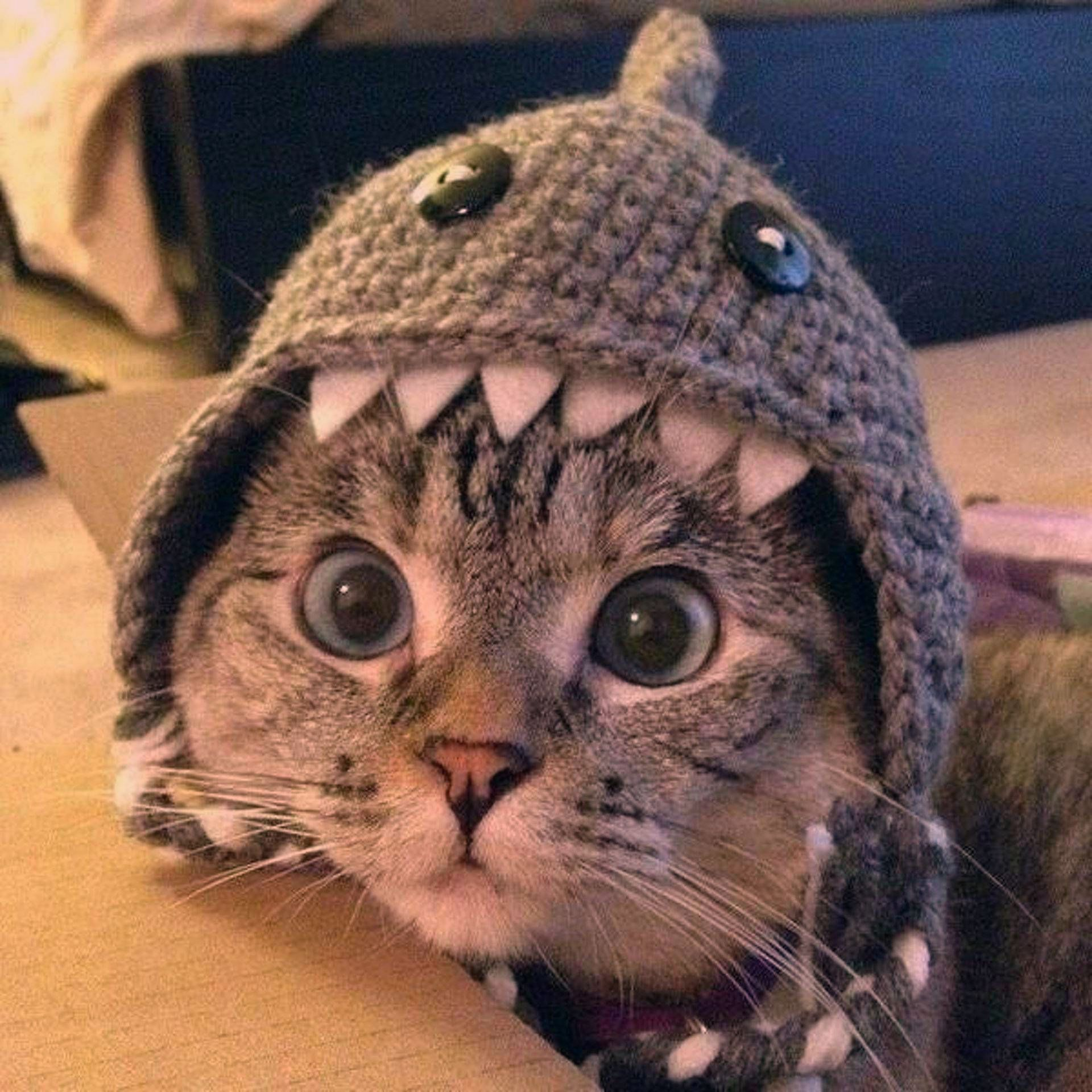 Mews: Funny cat picture collection!   Hope the weather is not as grey and cloudy as it is here! But just in case it is – here are some cute and funny cat photos to brighten up your day. Enjoy and feel free to share your own collection of funny cat photos. 🙂 Picture source Pinterest. So which one was your […]   #Cat, #Cats, #Cute, #Funny, #Katze, #Katzen, #Katzenworld, #Kawaii, #Pets, #ねこ, #猫 #Mews