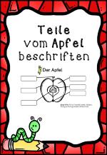 Teile vom Apfel – Biologie, Sachunterricht | Biologie ...