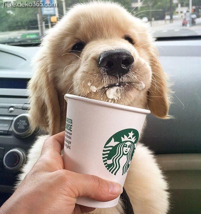 Photo of Grandes cachorros también azúcar a favor de ellos mundo