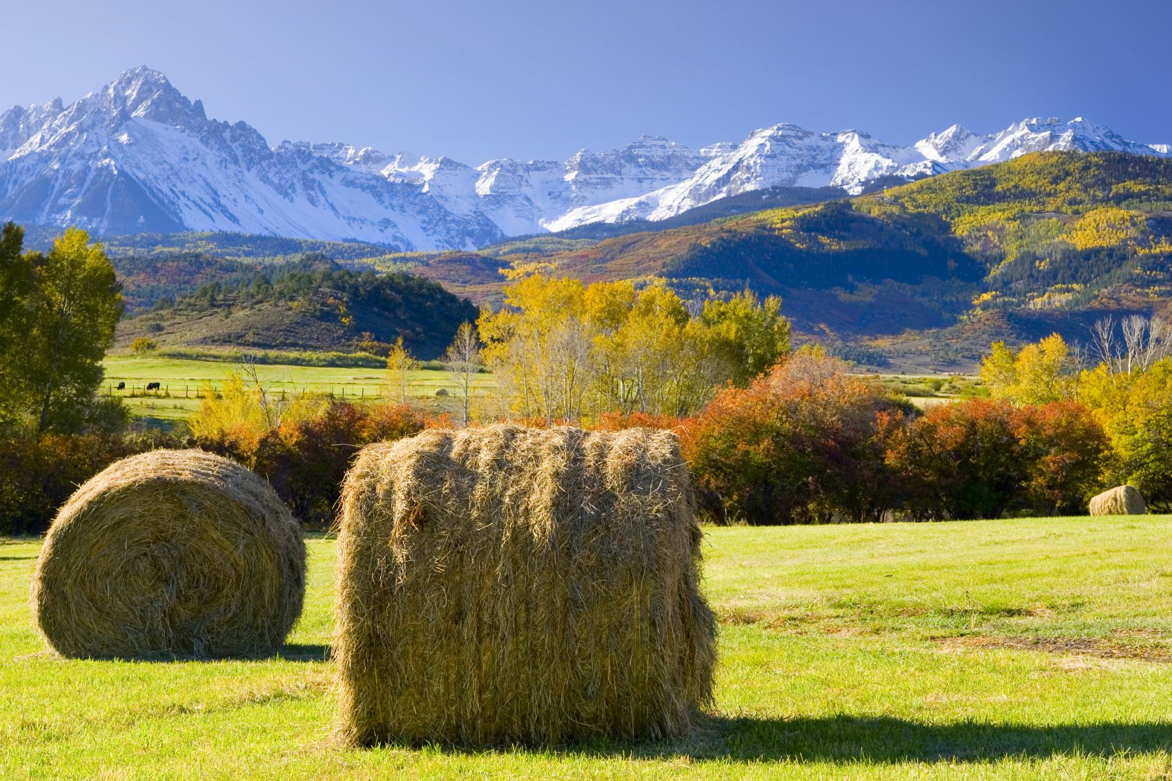 Sneffels Mountain Range Colorado. I'd love to go ride a ranch horse and camp in the wilderness :)