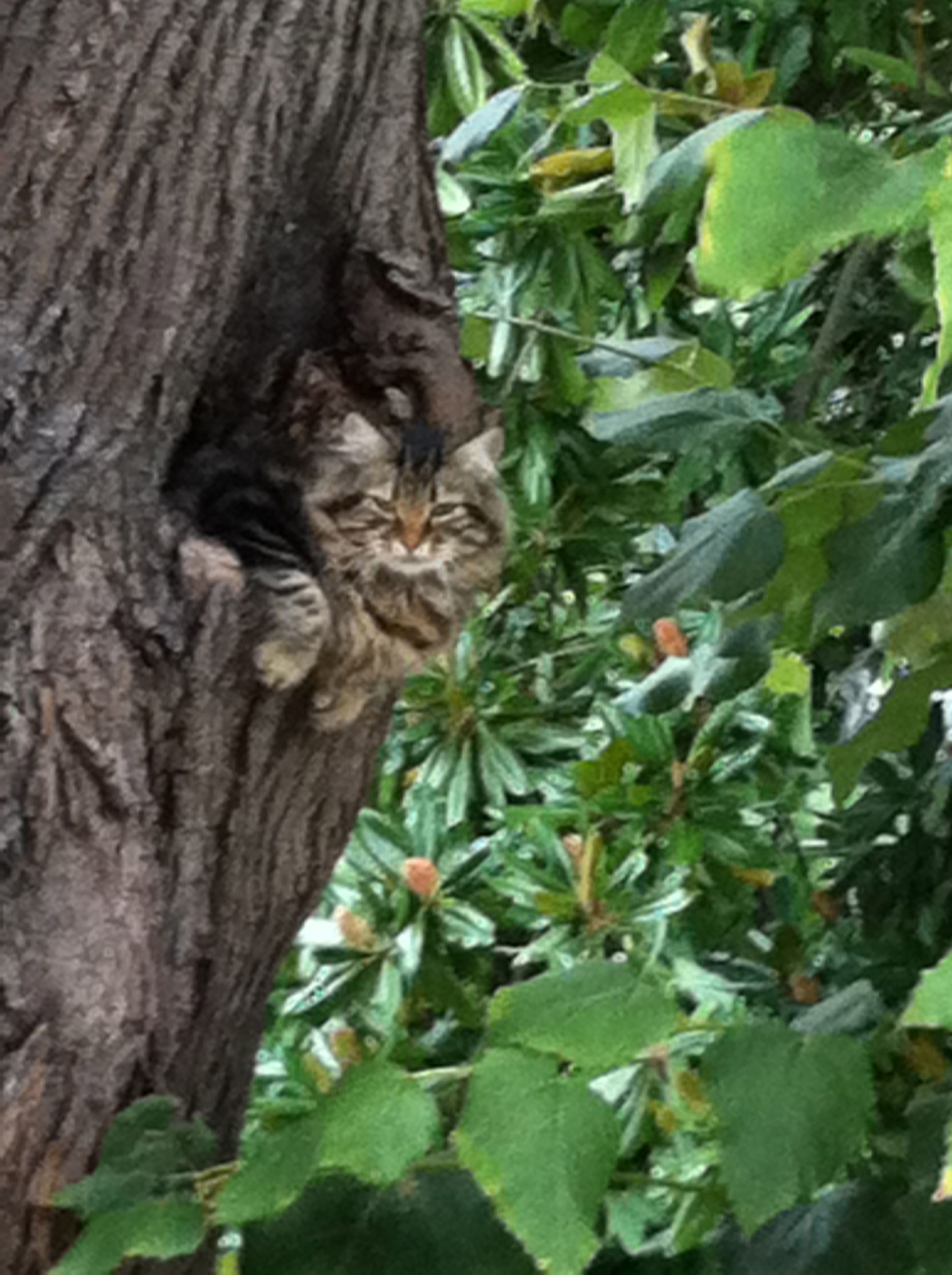 emirgan, tree, cat