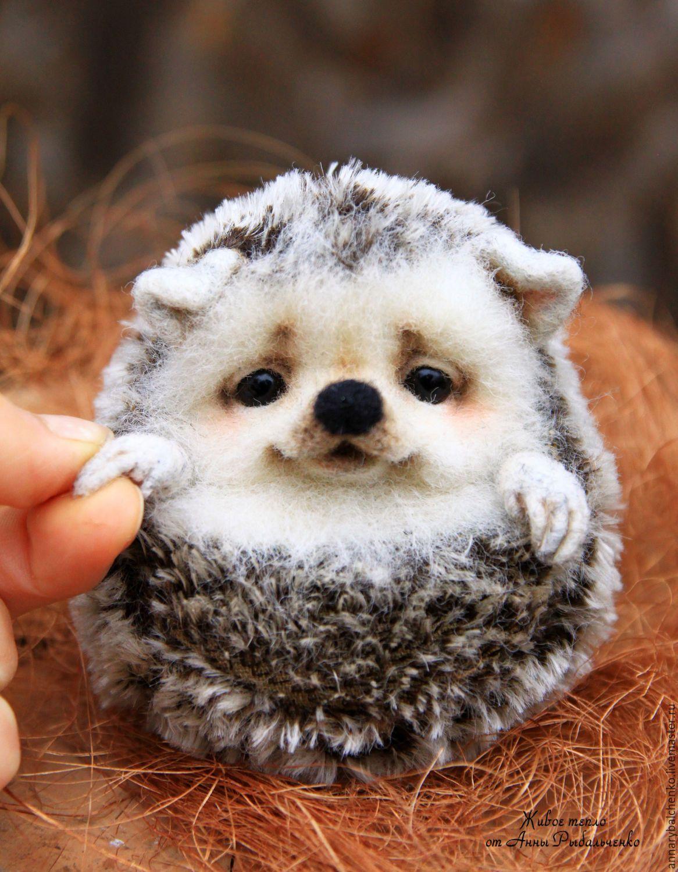 топ самых милых животных фото этой