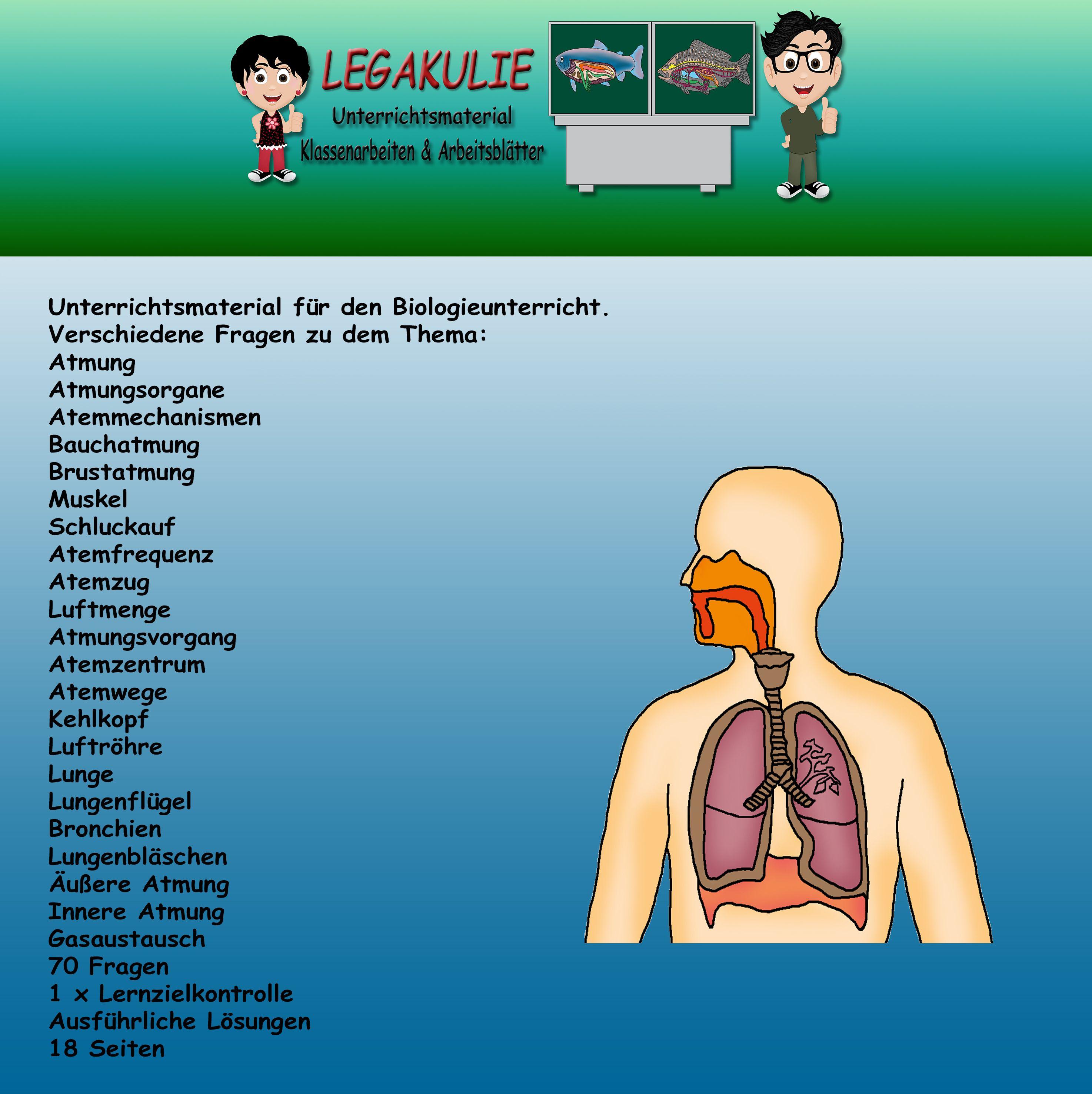 Arbeitsblatt Lunge Und Atemwege : Atmung klassenarbeiten schluckauf und schulaufgaben