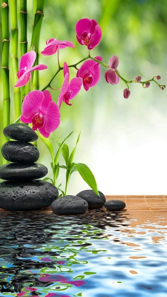 11june2019tuesday It S Mindblowing Zen Garden Orchids Flowers