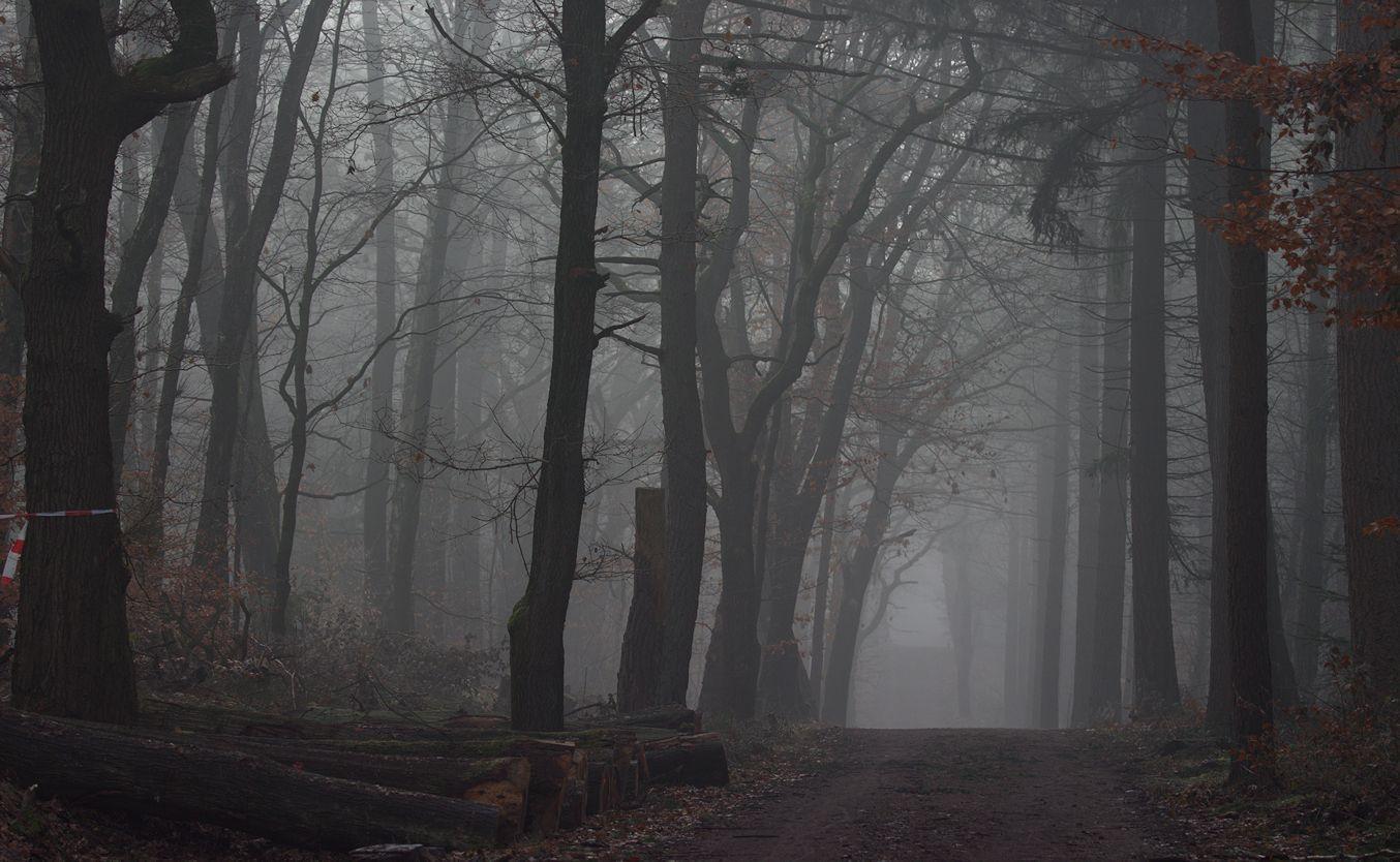Pin by Sarra O Ophélia on Fog and Mist Landscape, Photo