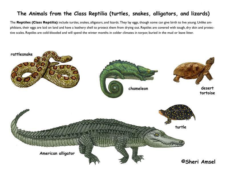 reptiles <3 :-) | Herpetology | Pinterest | Chang'e 3, Reptiles ...