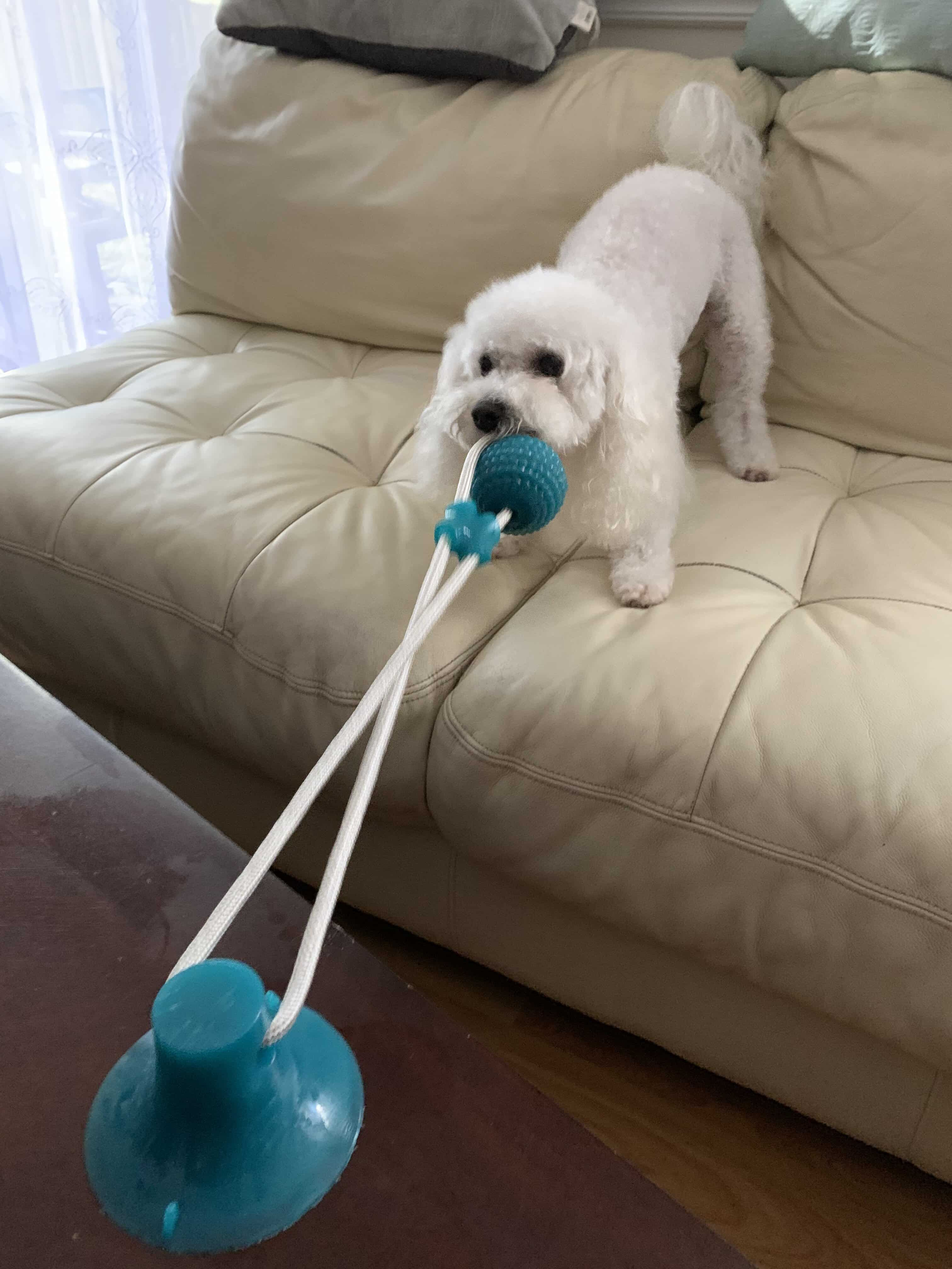 This Tug Toy Is All About Making Sure That Your Dog Have A