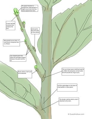All Worksheets stem worksheets : Botany stems worksheet printable   Botany   Pinterest   Curriculum ...