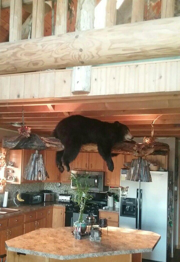 Bear Light Taxidermy Ideas For Log Cabin Pinterest