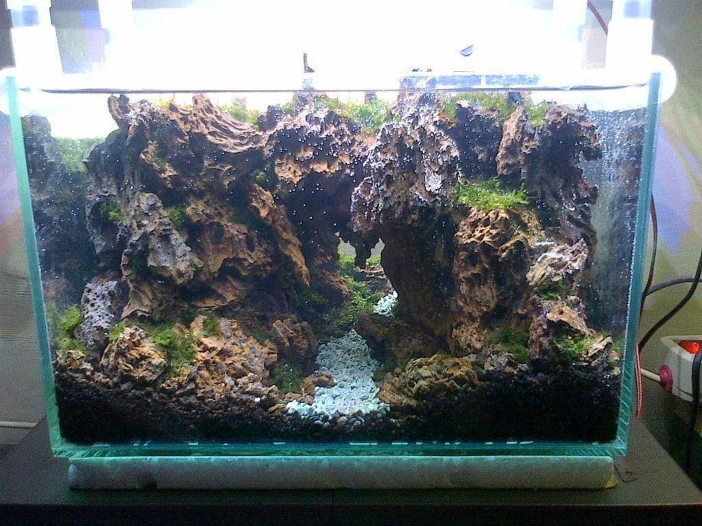 Pin By Stephanus Mardianto On Aquascape Planted Aquarium Aquarium Plants