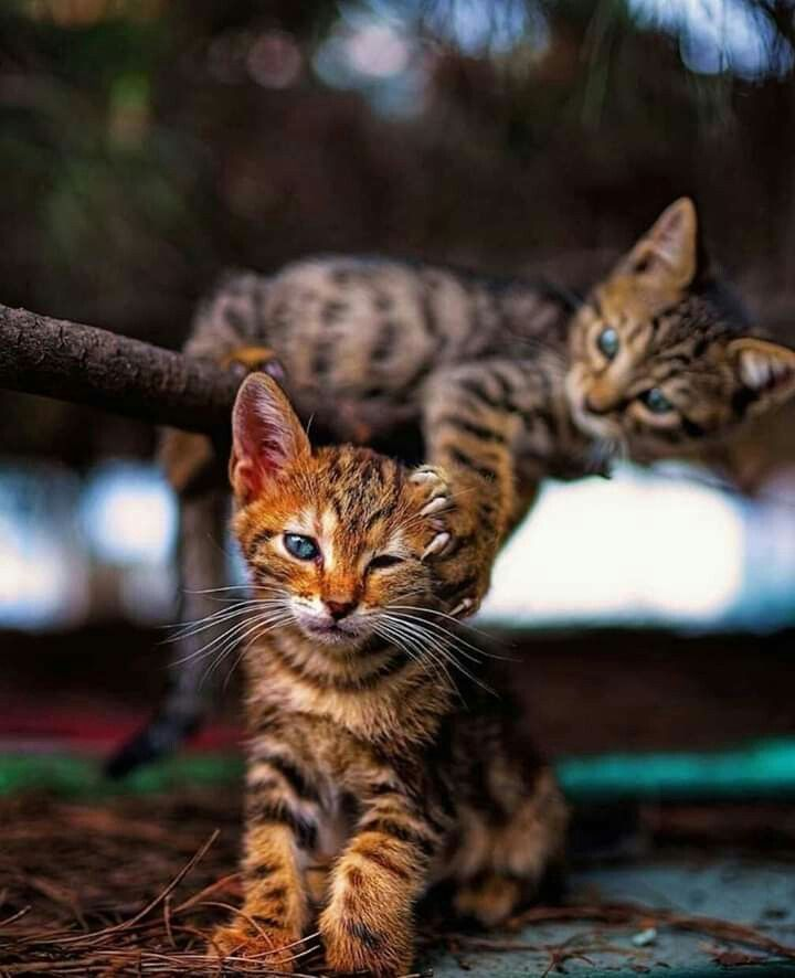 Pin Von Isengard Auf Katzenbabys Mit Bildern Katzenbabys
