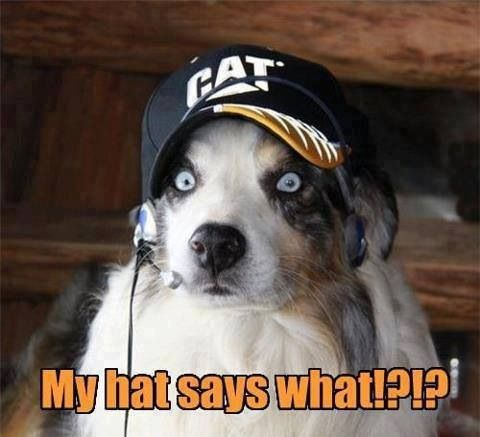 My Hat Says What Funny Animal Pictures Funny Cats Dogs