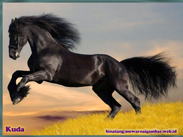 Nama Binatang Dari Huruf K Nama Gambar Binatang Horses Beautiful Horses Friesian Horse