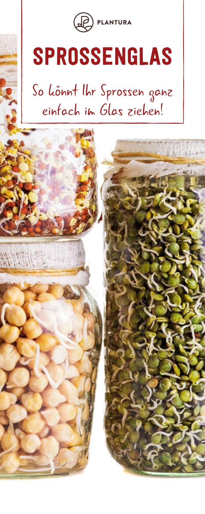 Sprossenglas: So gelingt der Anbau zu Hause kinderleicht - Plantura #nutritionhealthyeating