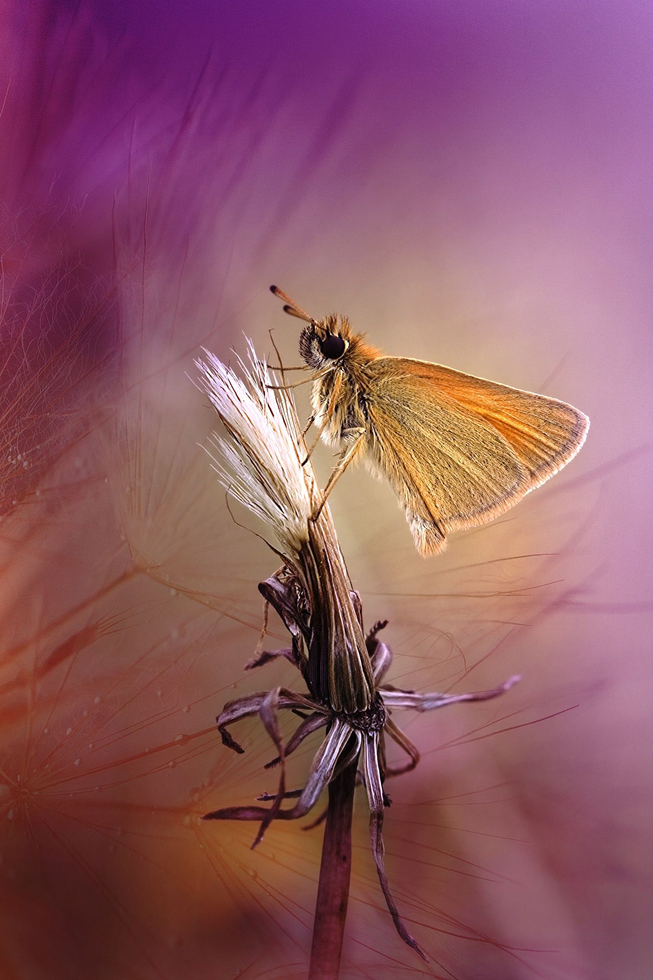 Pink by Wil Mijer on 500px Beautiful butterflies