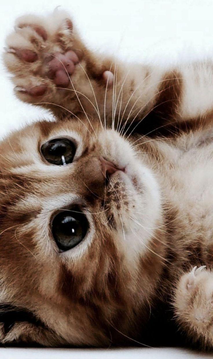 a peaceful little kitten dump - cat post