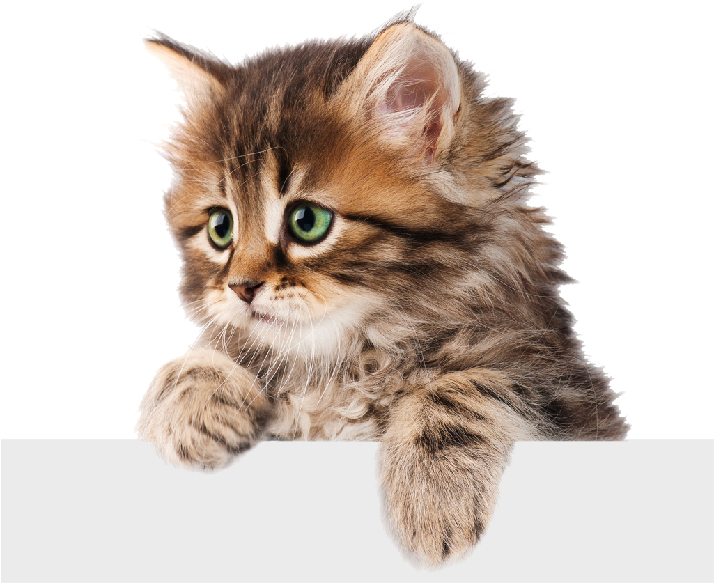 Home Cat Png Cats Kitten Png