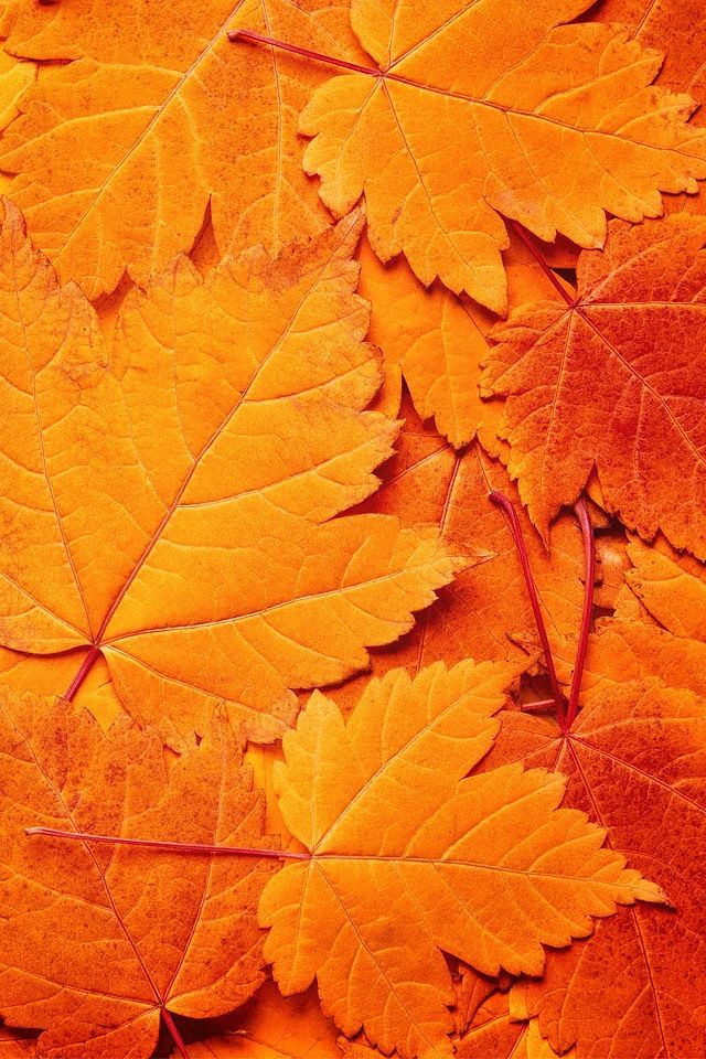 I Can Use The Leaves To See Texture And Colours Of Autumn