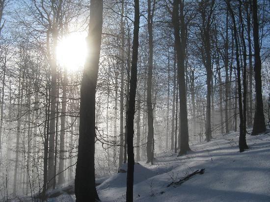 Winter sunlight through trees