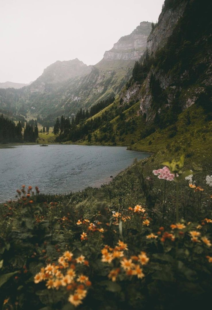 Mountains Flowers Nature Lake Mist Forest Rain Scenery Nature Nature Photography