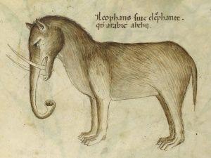 Cómo dibujar un animal que no se ha visto en siglos | Ciencia | EL PAÍS