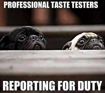 Funny Pug Dog Meme Pun Lol Pugs Funny Pug Memes Cute Pugs