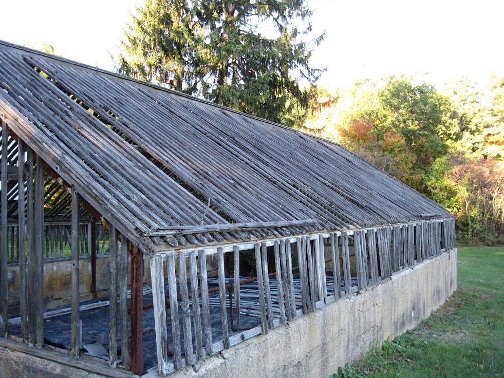 Well used greenhouse at Woodman Farm