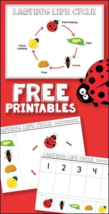 Free Ladybug Life Cycle Printables | Kid Blogger Network Activities ...