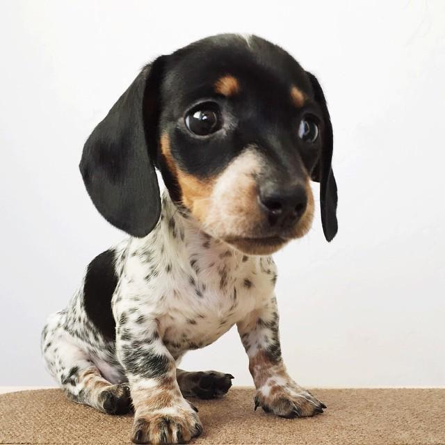 Marcia Ferguson On Cute Animals Cute Baby Animals Cute Dogs